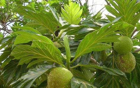 Obat Herbal Alami Untuk Mencegah & Mengatasi Penyakit Jantung