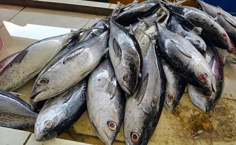 Manfaat Ikan Tuna Bagi Kesehatan
