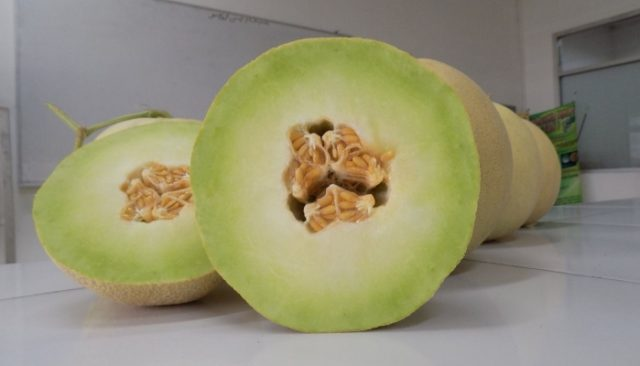 Manfaat Melon Bagi Kesehatan Tubuh
