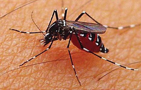 Penyebab Dan Gejala Penyakit Malaria Yang Sering Terjadi