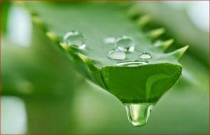 Sediakan Sabun Anti Bakteri Sebagai Obatnya Bisul
